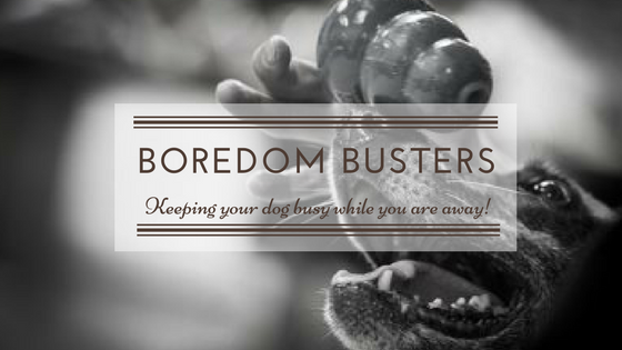 Boredom busters – keeping your dog busy while you are away