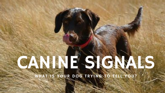 Calming Signals: What is your dog trying to tell you?