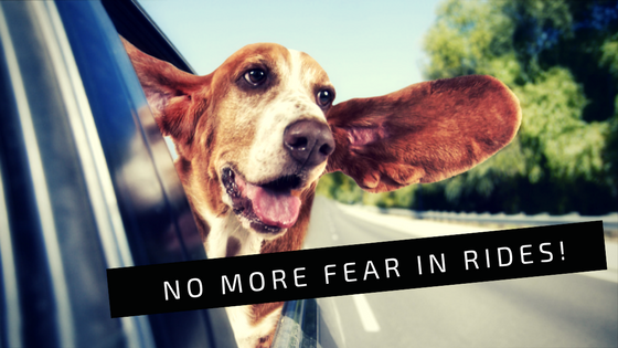 Fear of Riding in Cars