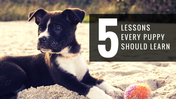 5 Lessons Every Puppy Should Learn