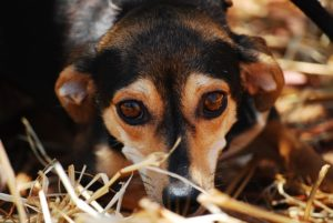 What to look for in a shelter dog
