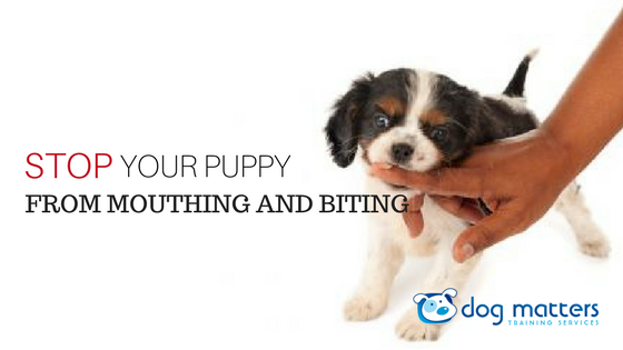 How to Stop Your Puppy From Mouthing and Biting