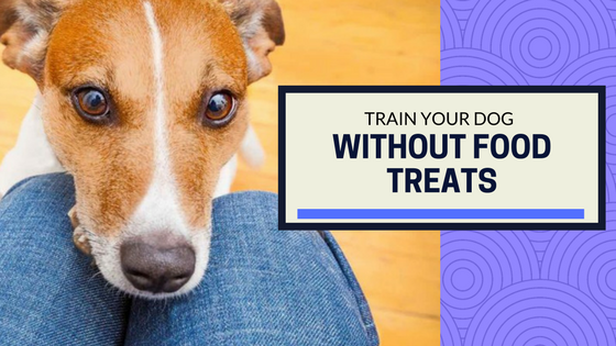 How to Train Your Dog Without Food Treats – And When To Use Food