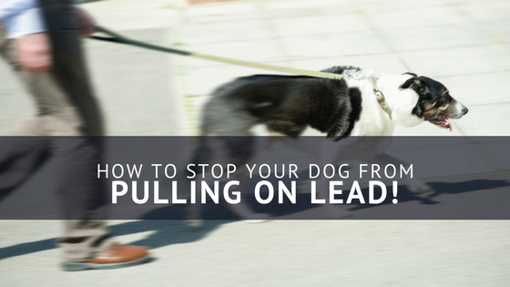How To Stop Your Dog From Pulling On The Lead – My Top Tips