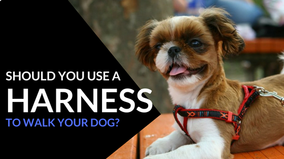 Should You Use A Harness to Walk Your Dog?