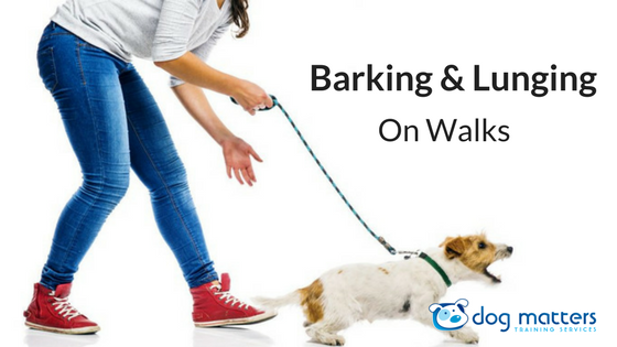 Barking & Lunging On Walks: There Is Hope!