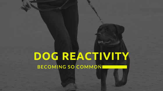 A Big Issue: Why Is Dog Reactivity Becoming So Common?