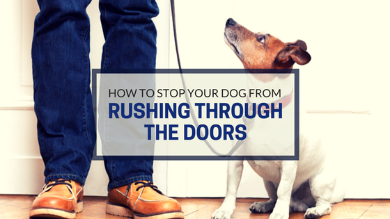 How To Stop Your Dog From Rushing Through Doors