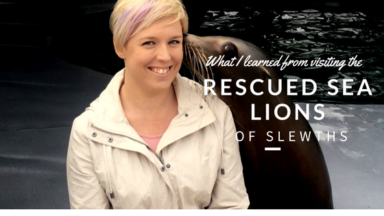 Slewth Rescue Lions