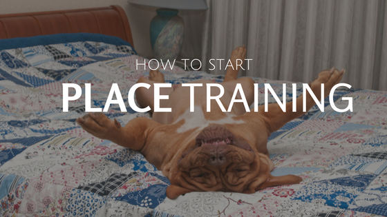 How To Start Place Training