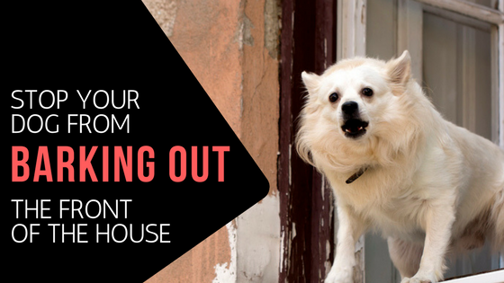 How To Stop Your Dog From Barking Out The Front Of Your House