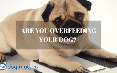 Are You Overfeeding Your Dog?