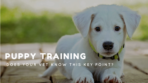 Puppy Training: Does Your Vet Know This Key Point?