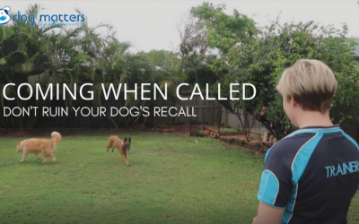 Coming When Called: Don't Ruin Your Dog's Recall