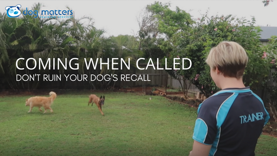 Coming When Called: How to Improve Your Dog's Recall!