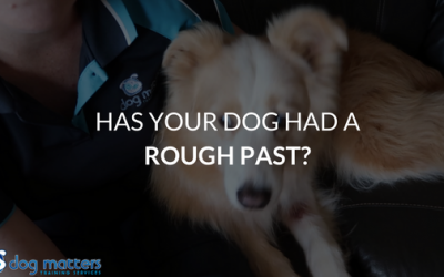 Has Your Dog Had A Rough Past