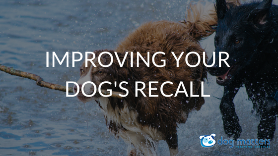Improving Your Dog's Recall