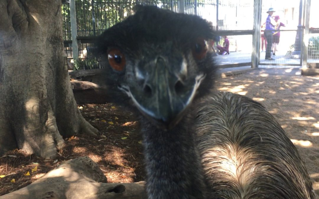 What Emu Training Taught Me About Dogs, and Life