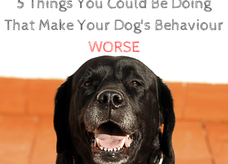 5 Things You Could Be Doing That Actually Make Your Dog Behave Worse!