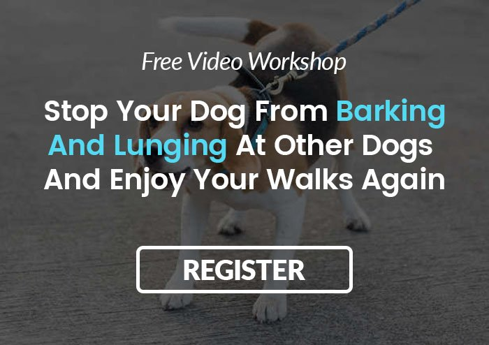 How To Stop My Dog Lunging Barking At Other Dogs